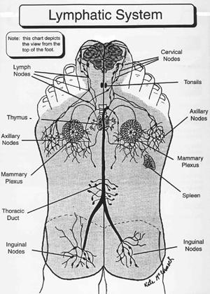 footology chart foot